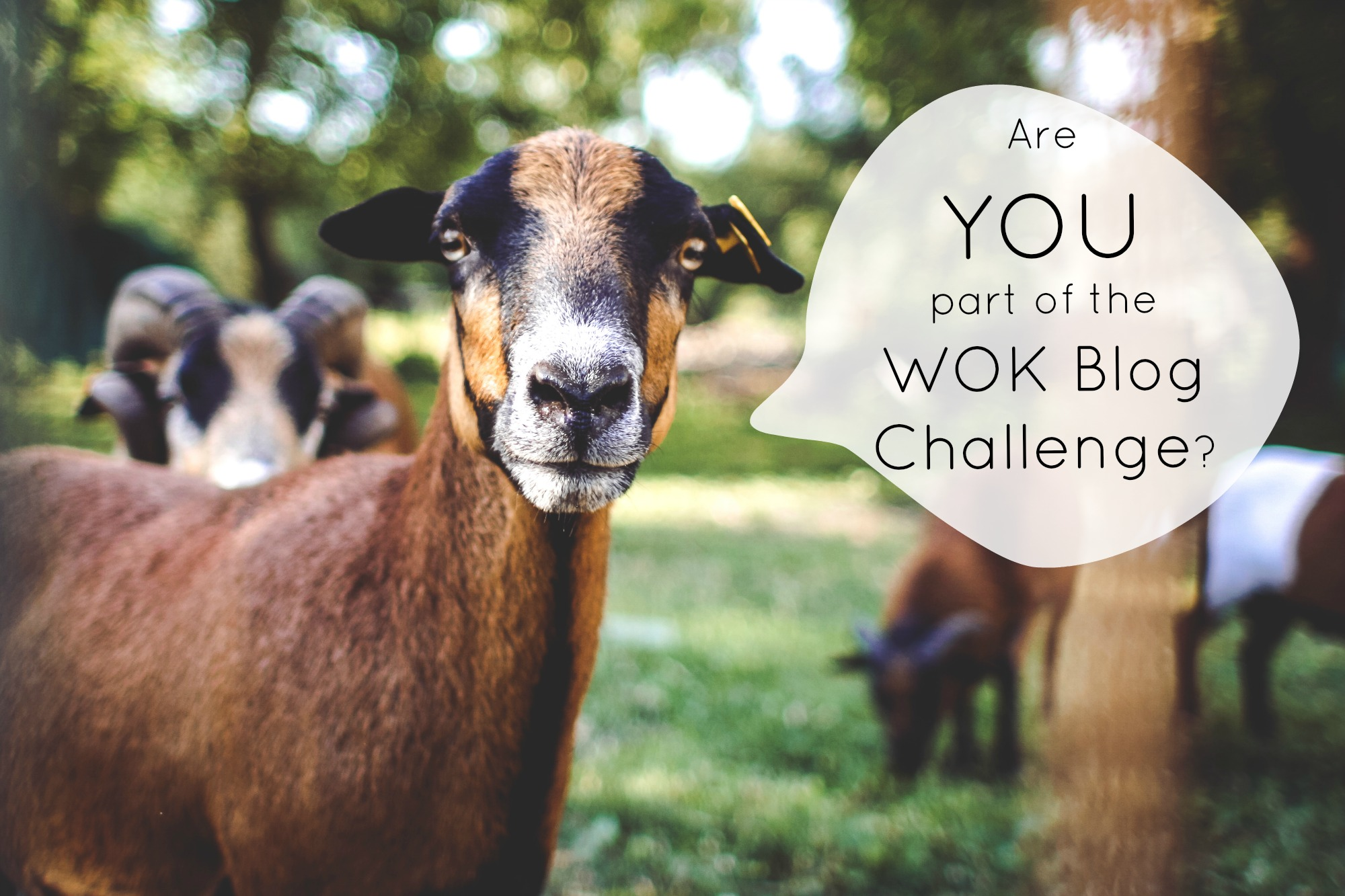 Are you part of the WOK Blog Challenge?